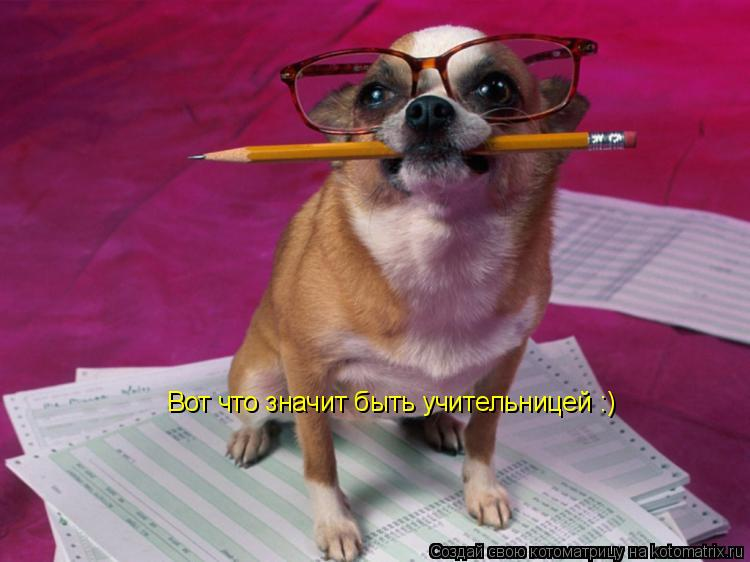 Котоматрица: Вот что значит быть учительницей :)