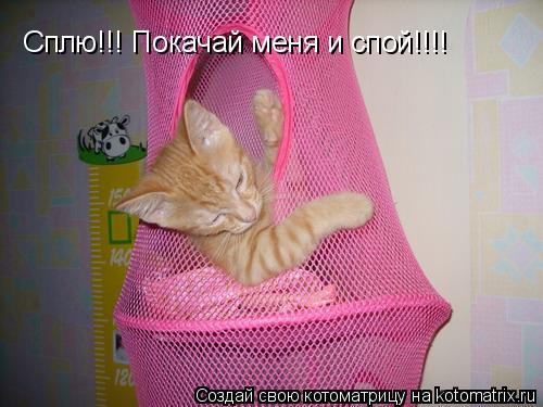 Котоматрица: Сплю!!! Покачай меня и спой!!!!