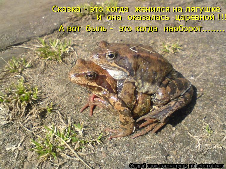 Котоматрица: Сказка - это когда  женился на лягушке  и  она  оказалась  царевной !!!! А вот  быль -  это когда  наоборот........