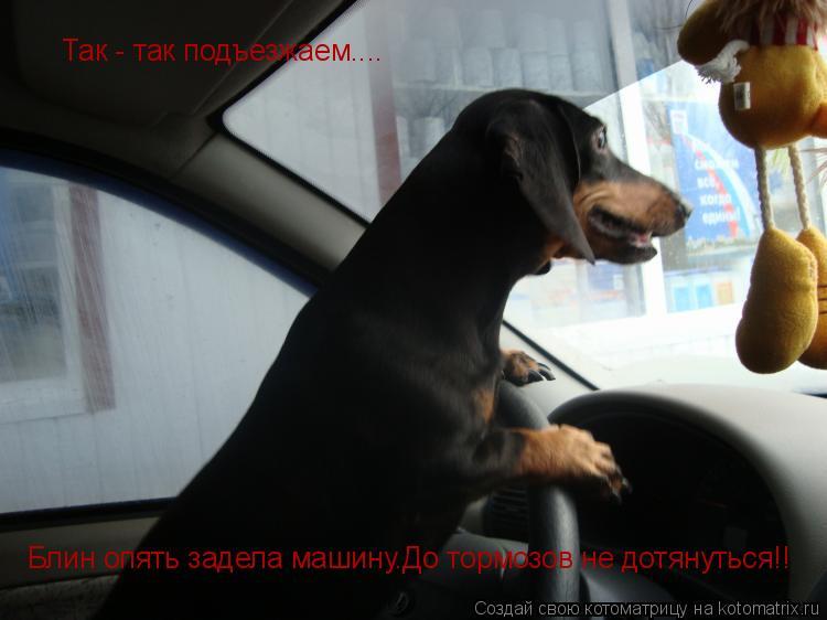 Котоматрица: Так - так подъезжаем.... Блин опять задела машину.До тормозов не дотянуться!!