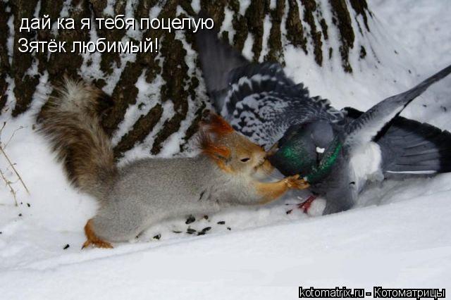 Котоматрица: дай ка я тебя поцелую Зятёк любимый!