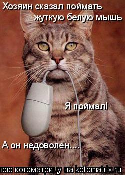 Котоматрица: Хозяин сказал поймать  жуткую белую мышь Я поймал! А он недоволен....