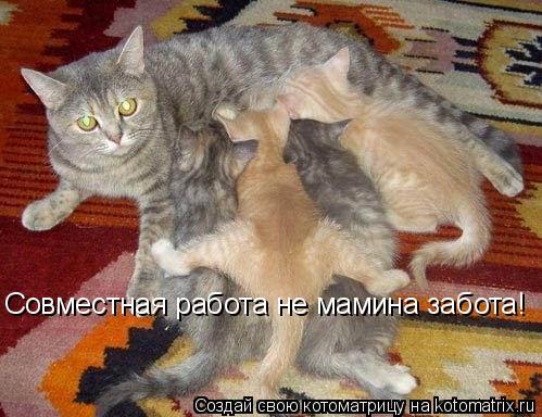 Котоматрица: Совместная работа не мамина забота!