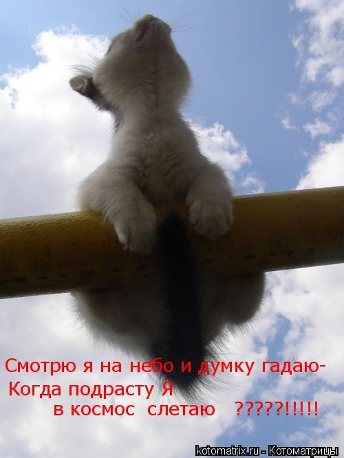 Котоматрица: Смотрю я на небо и думку гадаю- Когда подрасту Я  в космос  слетаю   ?????!!!!!