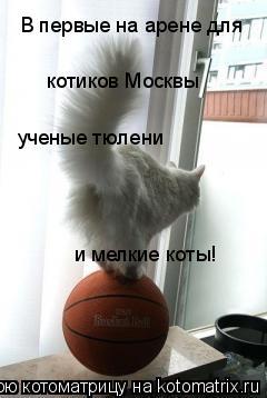 Котоматрица: В первые на арене для  котиков Москвы ученые тюлени и мелкие коты!