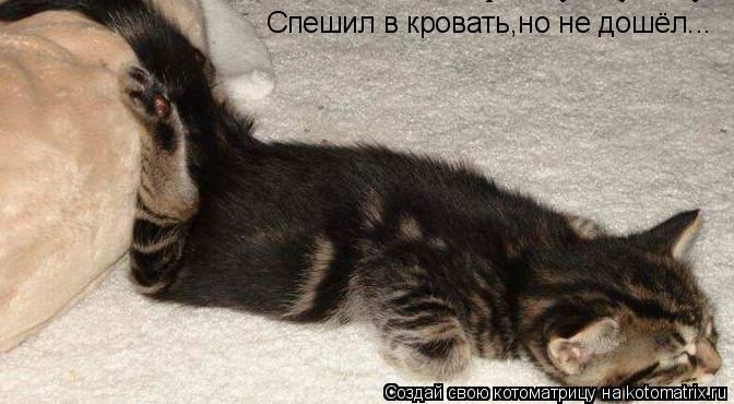 Котоматрица: Спешил в кровать,но не дошёл...