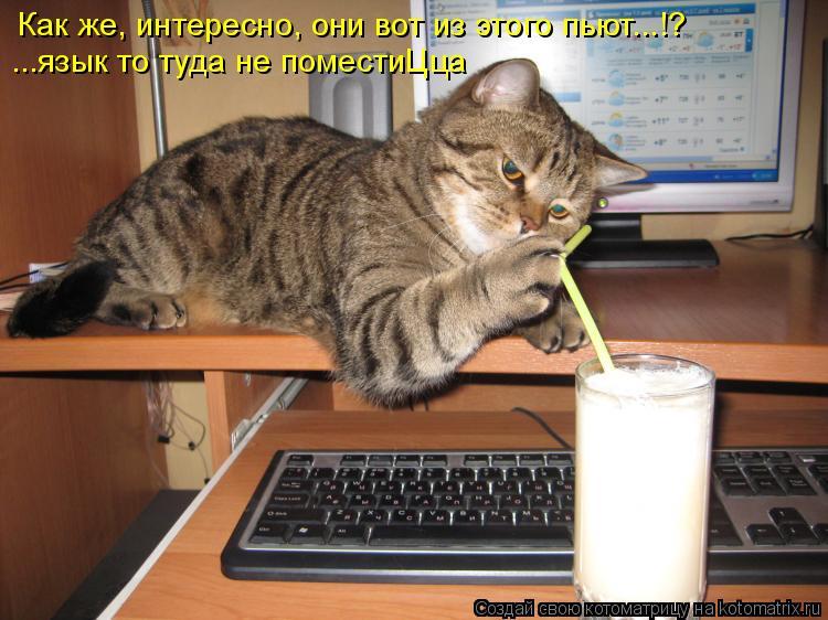 Котоматрица: Как же, интересно, они вот из этого пьют...!? ...язык то туда не поместиЦца