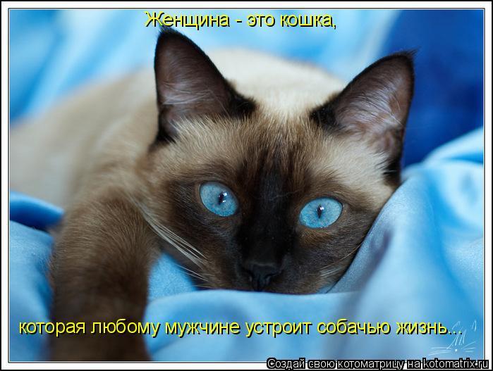 Котоматрица: Женщина - это кошка, которая любому мужчине устроит собачью жизнь...
