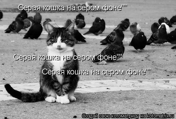 "Котоматрица: Серая кошка на сером фоне"""" Серая кошка на сером фоне"""" Серая кошка на сером фоне"""""