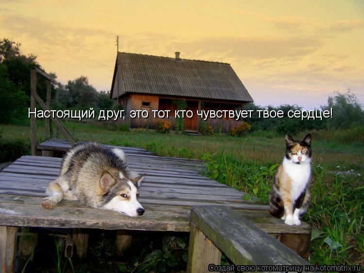 Котоматрица: Настоящий друг, это тот кто чувствует твое сердце!