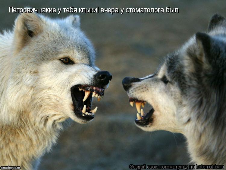 Котоматрица: Петрович какие у тебя клыки! вчера у стоматолога был
