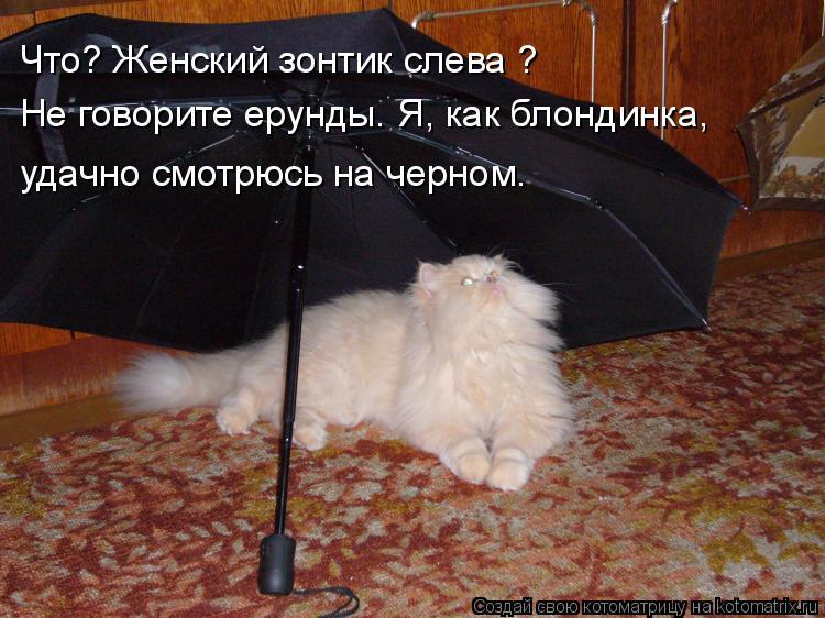 Котоматрица: Что? Женский зонтик слева ? Не говорите ерунды. Я, как блондинка, удачно смотрюсь на черном.