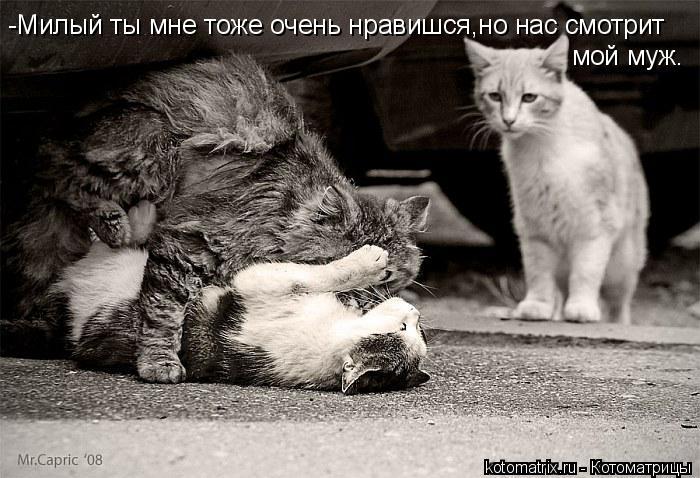 Котоматрица: -Милый ты мне тоже очень нравишся,но нас смотрит мой муж.