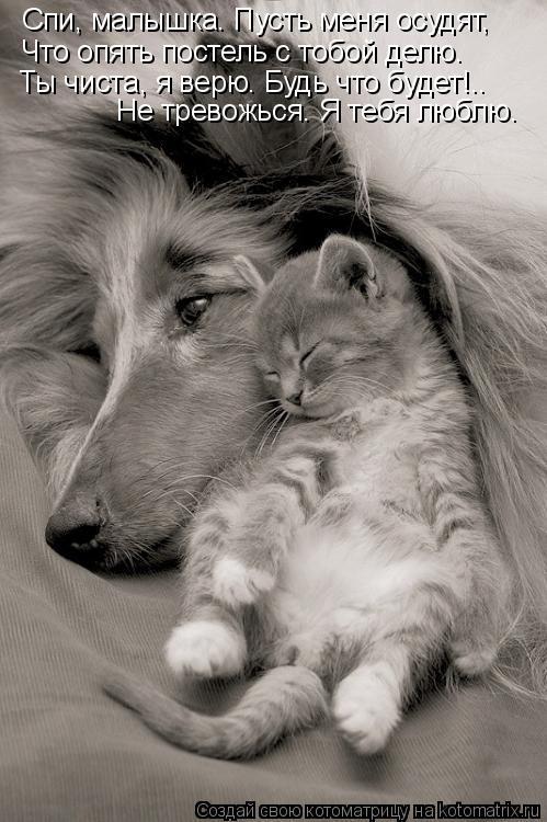 Котоматрица: Спи, малышка. Пусть меня осудят, Что опять постель с тобой делю. Ты чиста, я верю. Будь что будет!.. Не тревожься. Я тебя люблю.