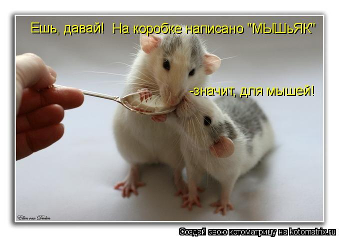 "Котоматрица: Ешь, давай! На коробке написано ""МЫШьЯК"" -значит, для мышей!"