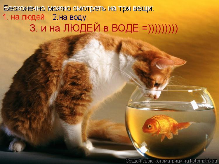 Котоматрица: Бесконечно можно смотреть на три вещи: 1. на людей 2.на воду 3. и на людей в воде Бесконечно можно смотреть на три вещи: 1. на людей 2.на воду 3. и н
