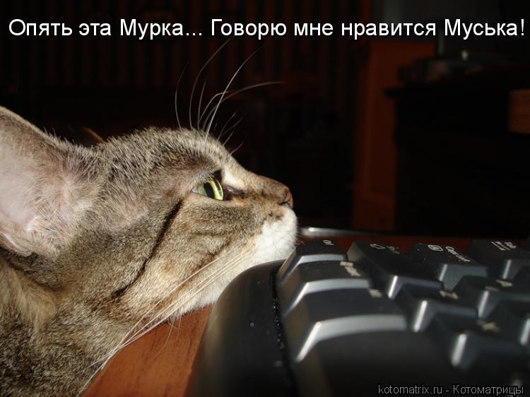 Котоматрица: Опять эта Мурка... Говорю мне нравится Муська!