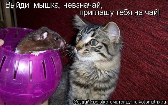 Котоматрица: Выйди, мышка, невзначай, приглашу тебя на чай!