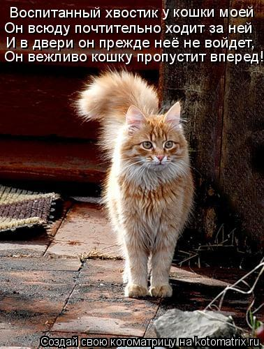 Котоматрица: Воспитанный хвостик у кошки моей Он всюду почтительно ходит за ней И в двери он прежде неё не войдет, Он вежливо кошку пропустит вперед!