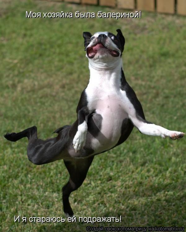 Котоматрица: Моя хозяйка была балериной!  И я стараюсь ей подражать!