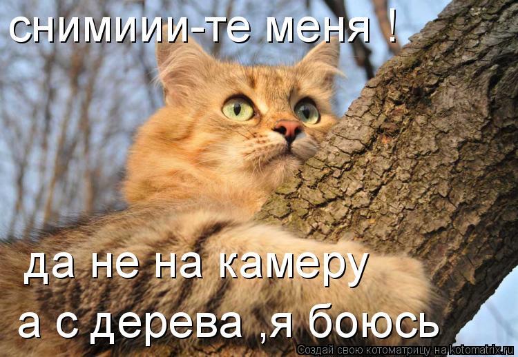 Котоматрица: снимиии-те меня ! да не на камеру  a с дерева ,я боюсь