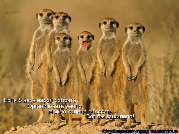 Котоматрица: Если б весь народ собрать, Организовать умело, Можно солнце обоссать - Вот бы зашипело!