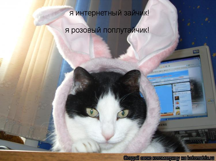 Котоматрица: я интернетный зайчик! я розовый поплутайчик!