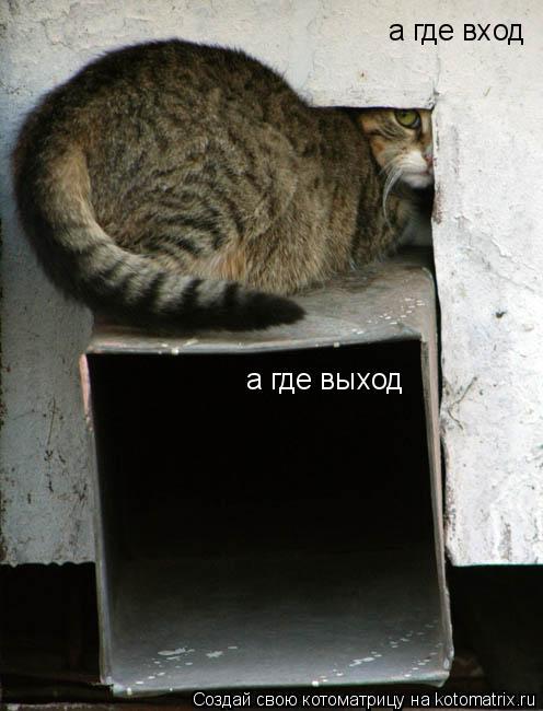 Котоматрица: а где выход а где вход