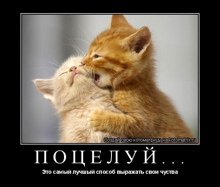 Котоматрица: Поцелуй... Это самый лучшый способ выражать свои чуства