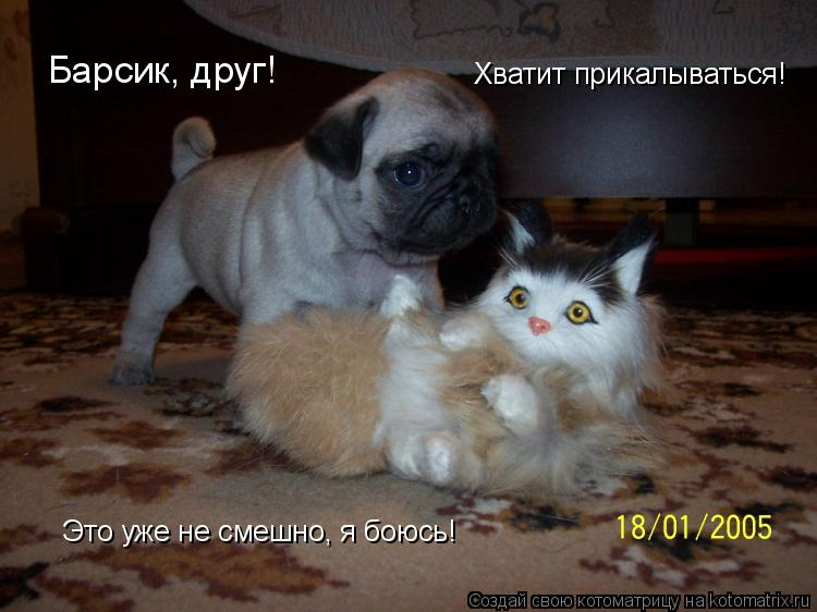 Котоматрица: Барсик, друг! Хватит прикалываться! Это уже не смешно, я боюсь!