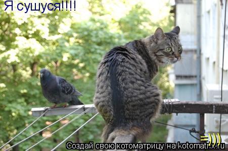 Котоматрица: Я сушуся!!!! =)))