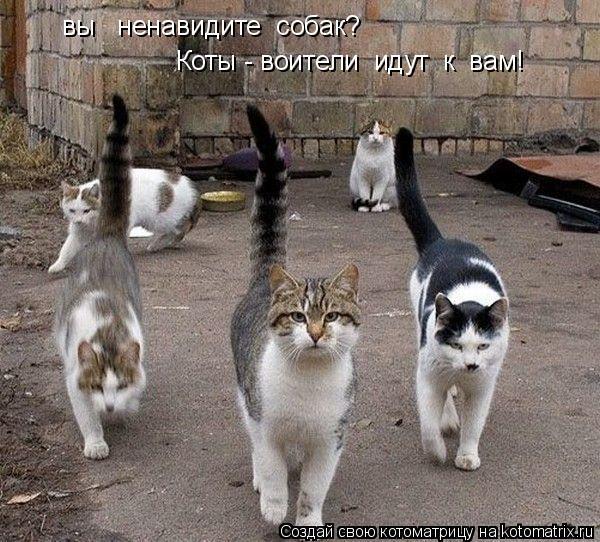Котоматрица: вы   ненавидите  собак?   Коты - воители  идут  к  вам!