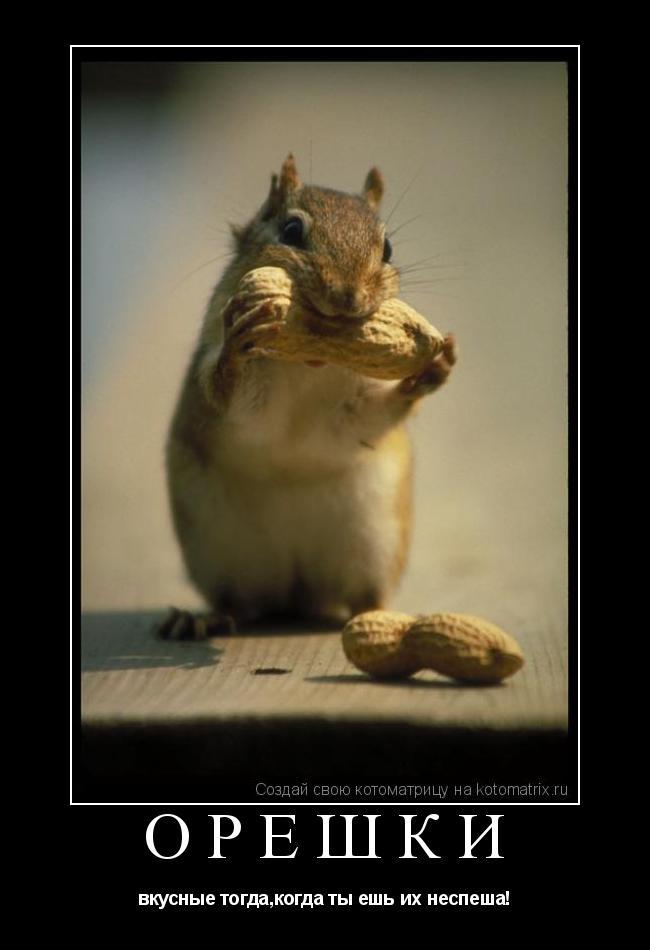Котоматрица: Орешки вкусные тогда,когда ты ешь их неспеша!
