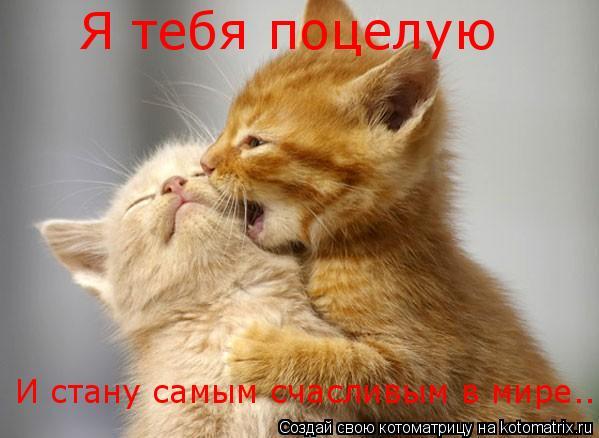 Котоматрица: Я тебя поцелую И стану самым счасливым в мире...
