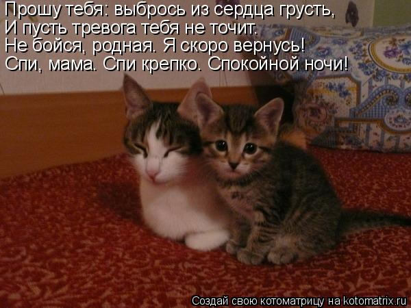 Котоматрица: Прошу тебя: выбрось из сердца грусть, И пусть тревога тебя не точит. Не бойся, родная. Я скоро вернусь! Спи, мама. Спи крепко. Спокойной ночи!