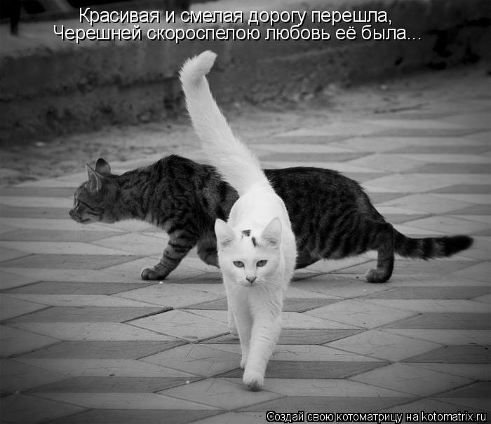 Котоматрица: Красивая и смелая дорогу перешла, Черешней скороспелою любовь её была...