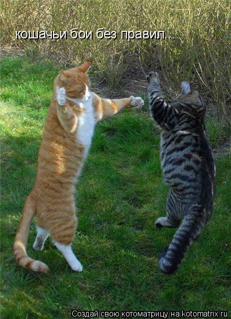 Котоматрица: кошачьи бои без правил...