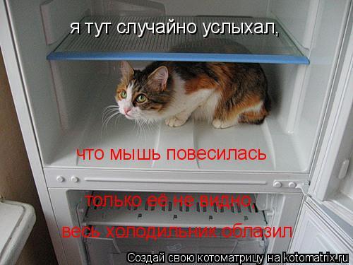 Котоматрица: я тут случайно услыхал, что мышь повесилась только её не видно, весь холодильник облазил