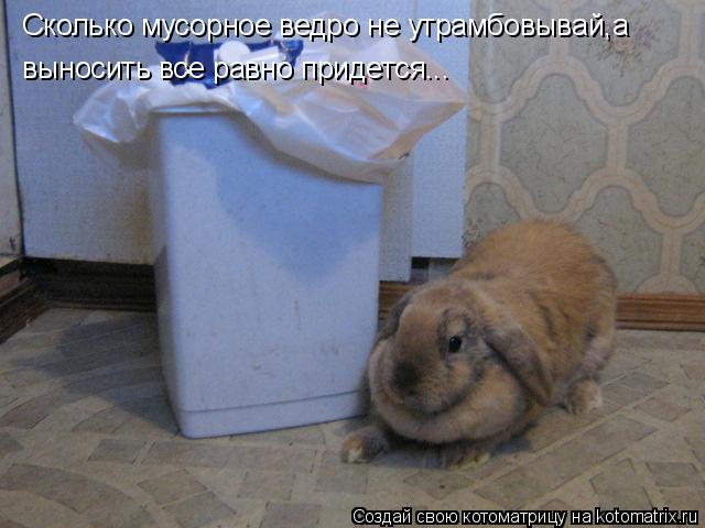 Котоматрица: Сколько мусорное ведро не утрамбовывай,а  выносить все равно придется...