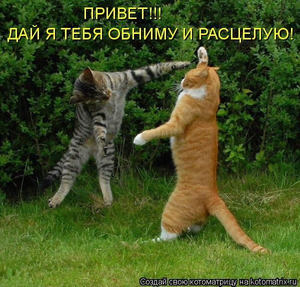 Котоматрица: ПРИВЕТ!!! ДАЙ Я ТЕБЯ ОБНИМУ И РАСЦЕЛУЮ!