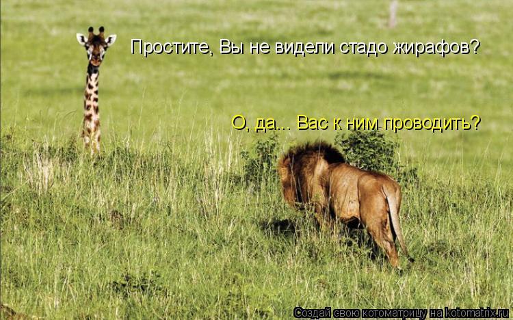 Котоматрица: Простите, Вы не видели стадо жирафов? О, да... Вас к ним проводить?