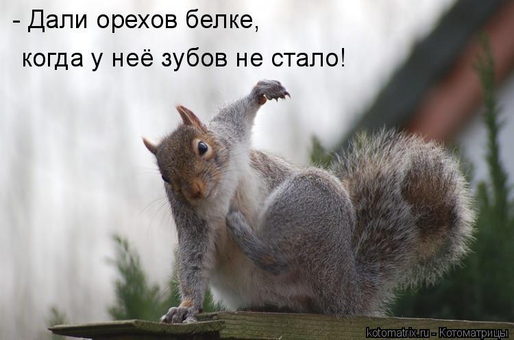 Котоматрица: - Дали орехов белке,  когда у неё зубов не стало!