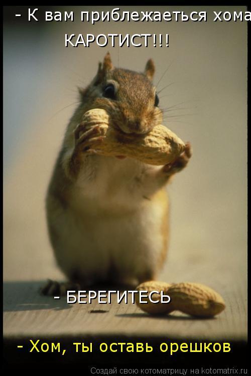 Котоматрица: КАРОТИСТ!!!  - К вам приблежаеться хома  - БЕРЕГИТЕСЬ - Хом, ты оставь орешков