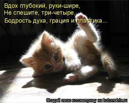 Котоматрица: Вдох глубокий, руки-шире, Не спешите, три-четыре, Бодрость духа, грация и пластика...