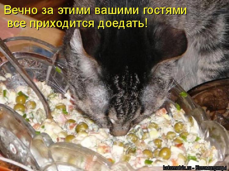 Котоматрица: Вечно за этими вашими гостями  все приходится доедать!