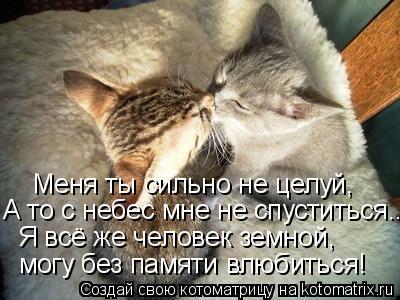 Котоматрица: могу без памяти влюбиться! Я всё же человек земной, А то с небес мне не спуститься... Меня ты сильно не целуй,