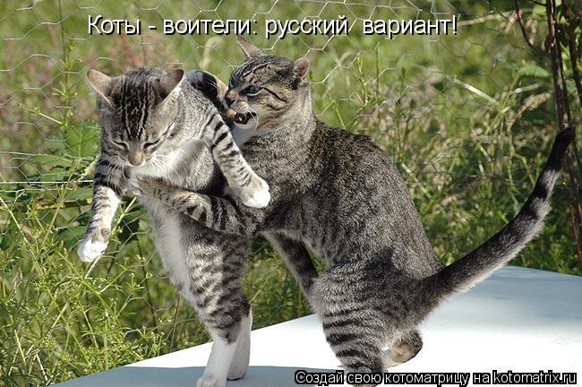 Котоматрица: Коты - воители: русский  вариант!