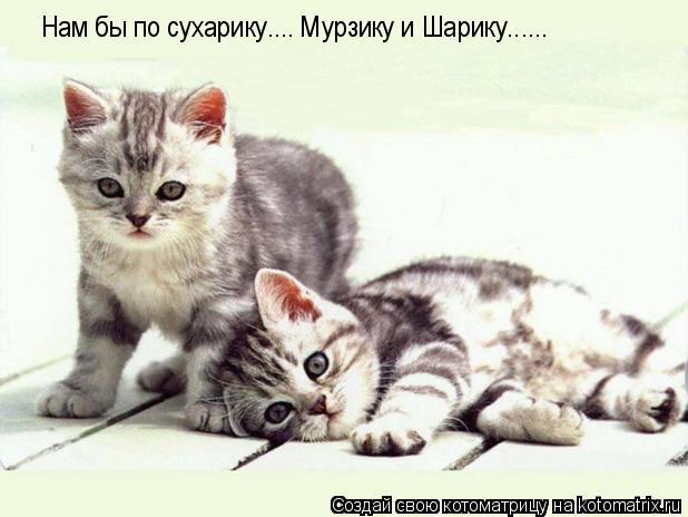 Котоматрица: Нам бы по сухарику.... Мурзику и Шарику......