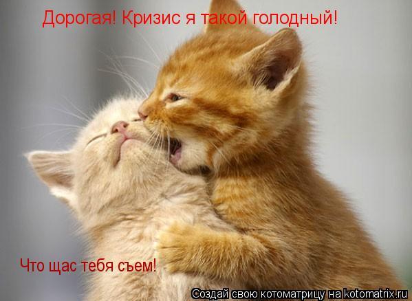 Котоматрица: Дорогая! Кризис я такой голодный!  Что щас тебя съем!