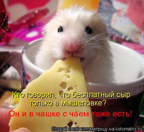 Котоматрица: Кто говорил, что бесплатный сыр только в мышеловке? Он и в чашке с чаем тоже есть!